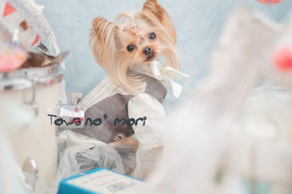 キボウノハナ撮影会(Candy Circusセルフ撮影付き)@bless dog cafe